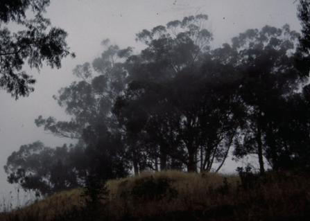 Berkeley hills fog
