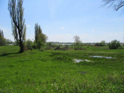 Elbe meadows