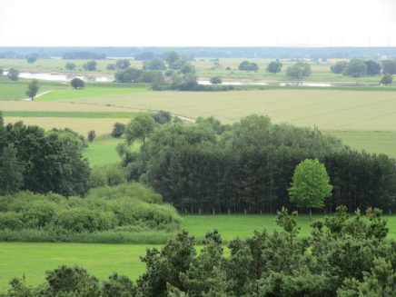 Elbe bei Jerichow