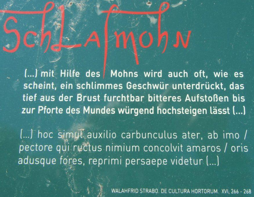 2015_09_13 Stift Melk (A), Schlafmohn im Park