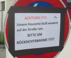 2013_06_14 München-Ramersdorf: Hausente
