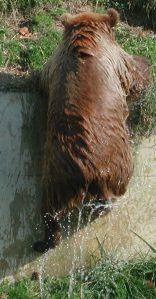2011_10_22 Bern (CH), Braunbär