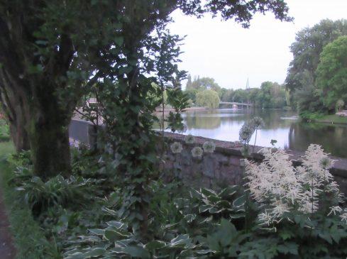 2017_06_04 Hamburg-Eppendorf: Meenkwiese-Paradise