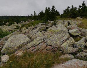 2017_07_09 Harz, Brocken, Teufelskanzel: Granit mit Wollsackverwitterung