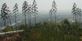2008 Los Angeles