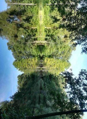 2018_08_12, Hamburg: Stadtpark