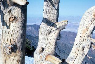 1986_03_26 Von Telescope Peak (CA) Blick ins Death Valley