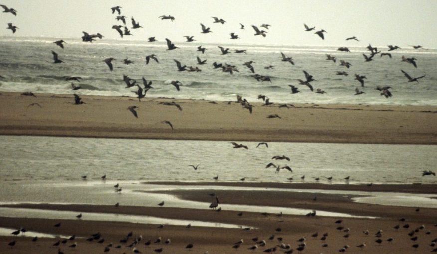 1988_07_04 Santa Ynez River mouth