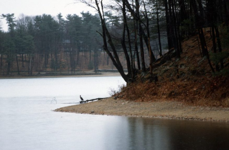 1988_11_17 Walden Pond