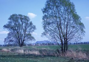 1967_05_07 Amöneburg von W