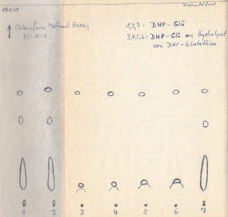 1969_05_14 DNP Glutaminsäure Chromatogramm