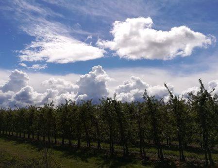 2019_05_04 Altes Land Apfelplantage