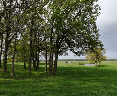 2019_05_05 Groß Thun: Wallburg innen von NO, mit Schwinge