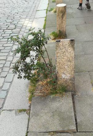 2019_08_01 Altstadtgrün