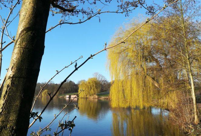 2020_03_14 HH Stadtpark, (3) Stadtparksee, Westufer