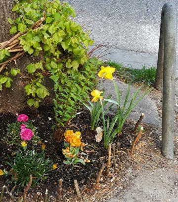2020_04_25 Hamburg-Winterhude Street gardening