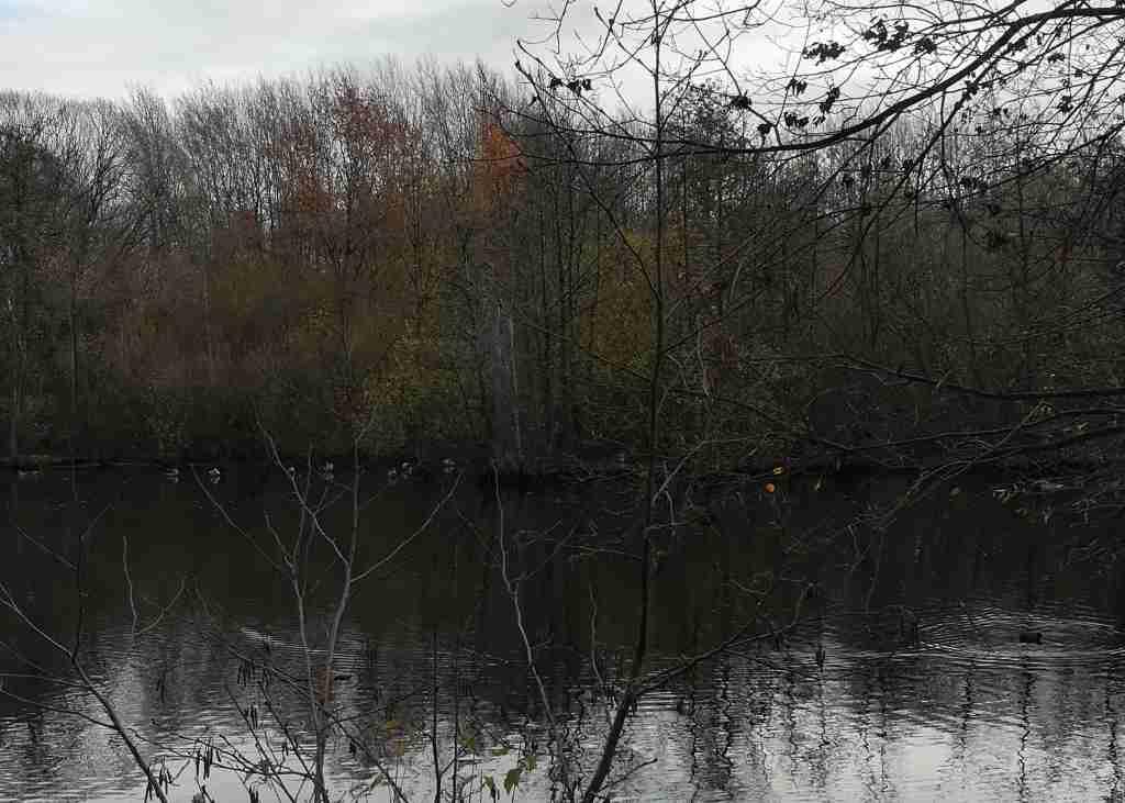 2020_11_22 HH-Bramfeld: Hochwasserrückhaltebecken Barenbleek der Osterbek