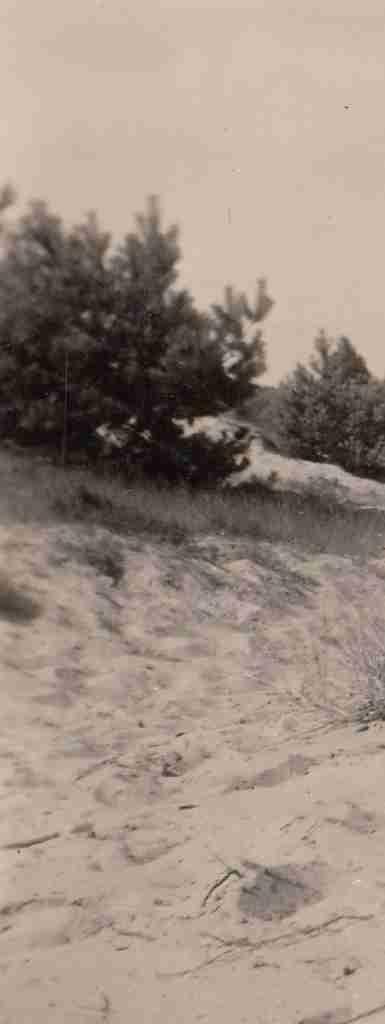 1951 Sommer - Osenberge 03 detail2