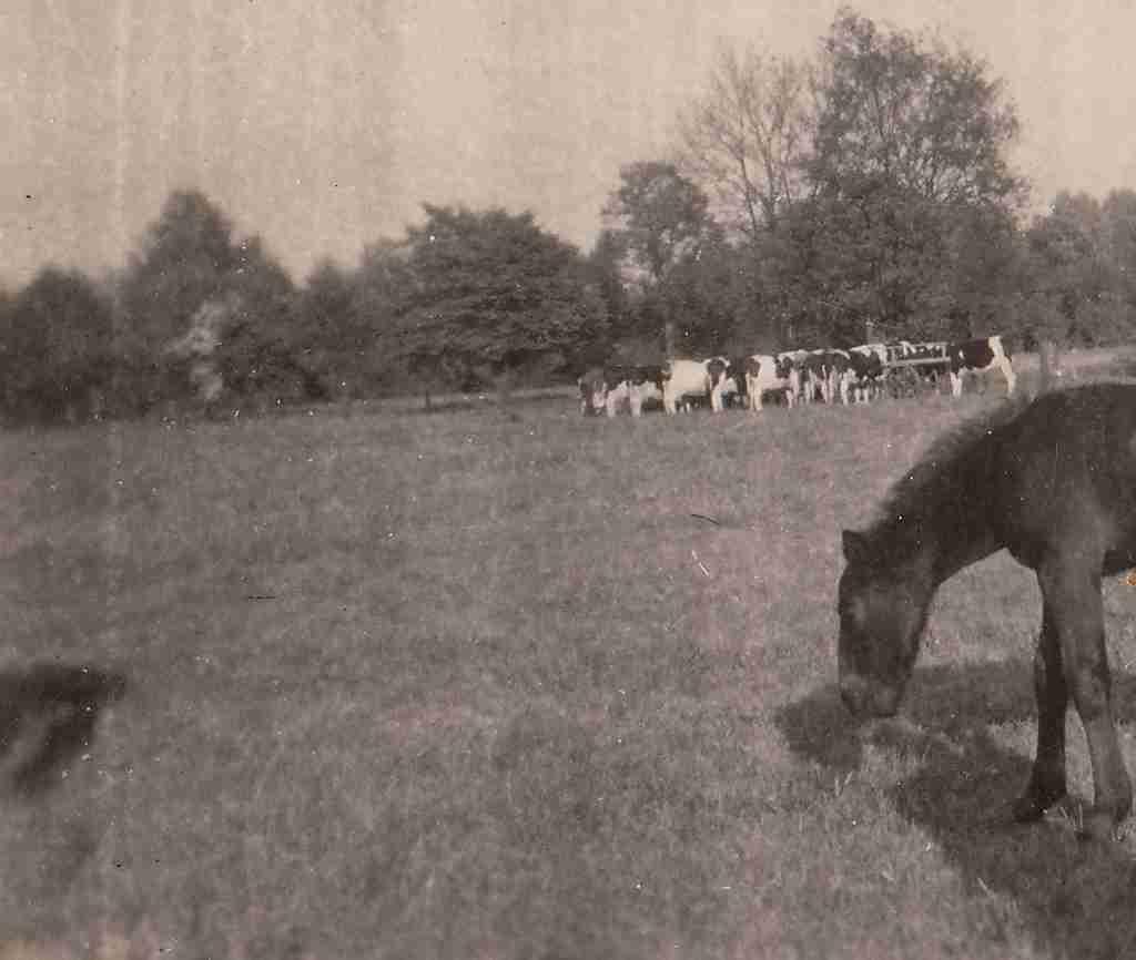 1952 Sommer - bei Hanken Ohmstede detail