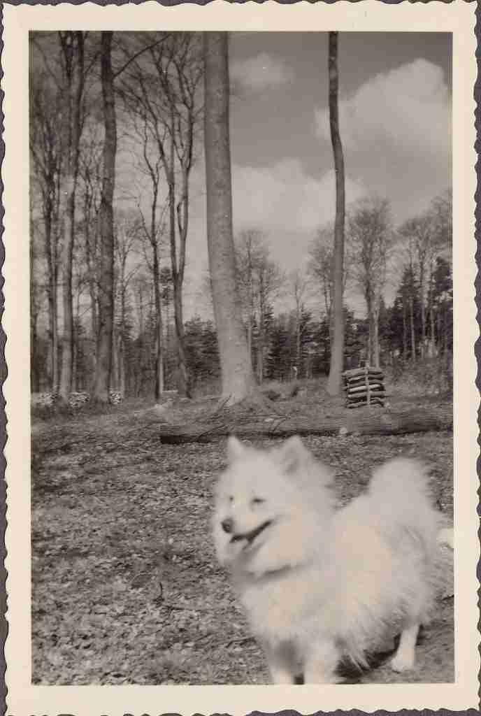1957_04 o. 05 Wildenloh