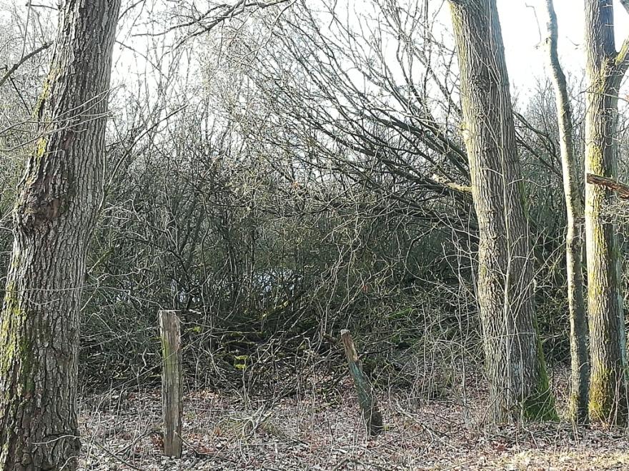 2021_02_24 NSG Stapelfelder Moor