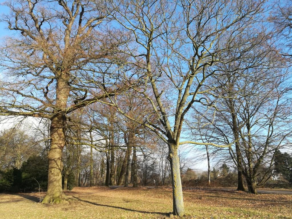 2021_02_26 Nienstedten: Wesselhoeftpark