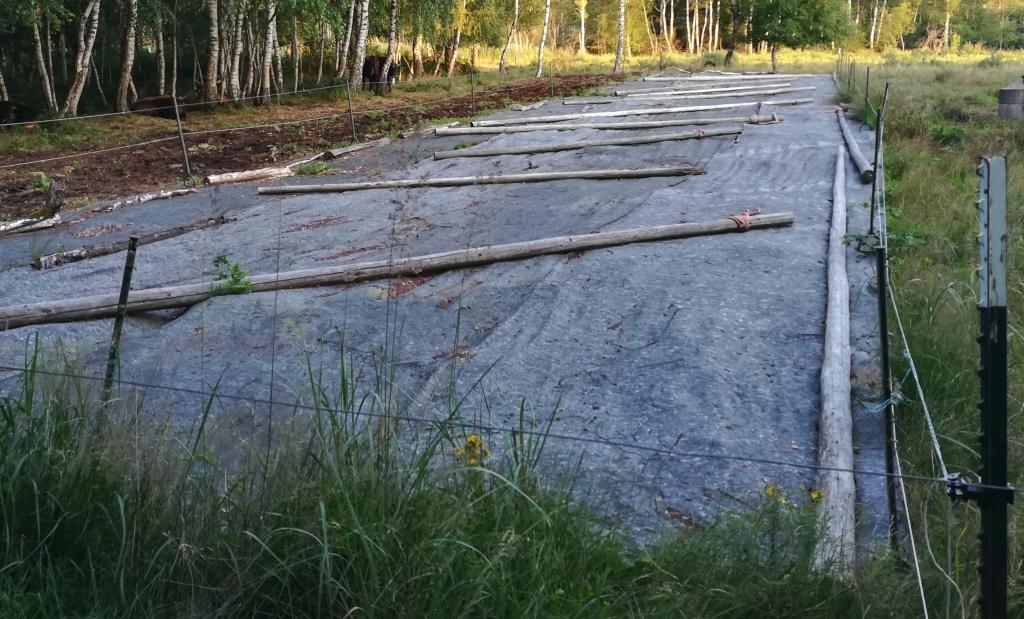 2021_07_20 Fußbergmoos, Ausdunkelung gegen Brombeerwuchs